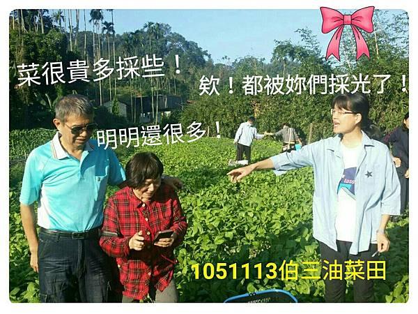1051113伯三有機菜園樂_2833.jpg
