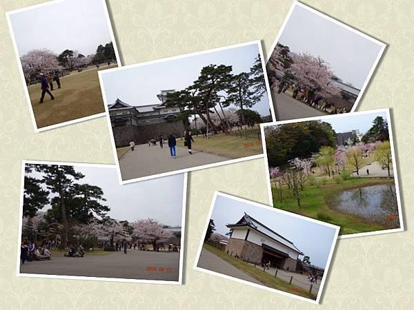 金澤城櫻花1