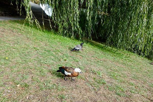 紐西蘭第四天46.jpg