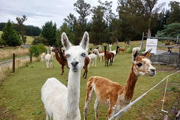 紐西蘭第七天02.jpg