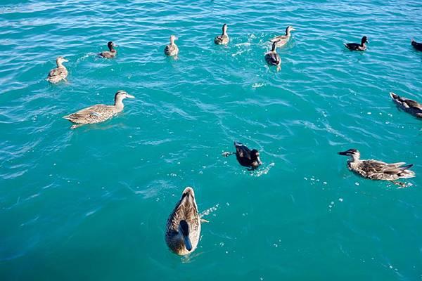 紐西蘭第十天29.jpg