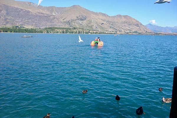 紐西蘭第十天31.jpg