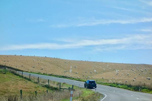 紐西蘭第十一天28.jpg
