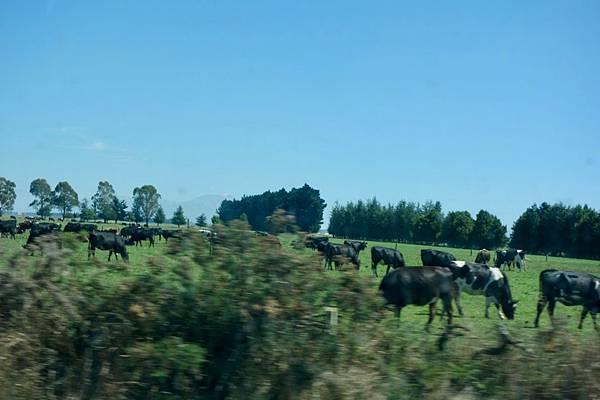 紐西蘭第十一天30.jpg