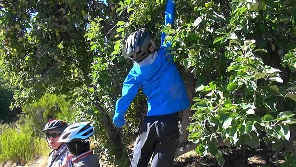 自行車(1).jpg