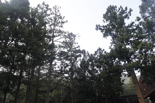 森林步道一角