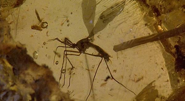 Jurassic Park 1993.mkv_snapshot_00.25.51_[2015.06.16_09.55.02]