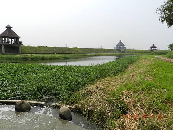 蒜頭生態園區