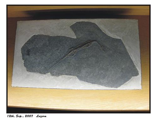 12-09-2007-034.jpg