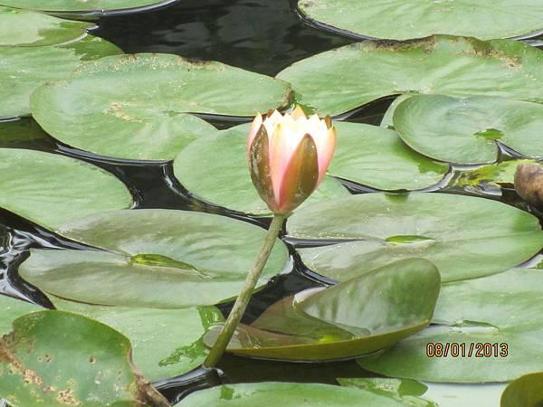 美麗之花 (3)