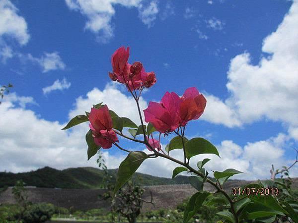 美麗之花 (2)