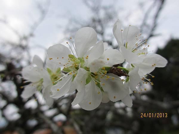 美麗之花 (17)