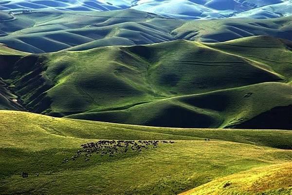 新疆伊犁滿山谷的杏花-28-.jpg