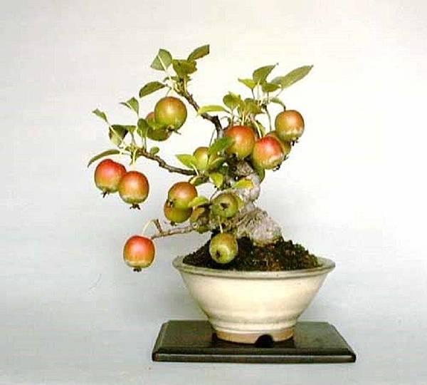大小盆栽-2-.jpg