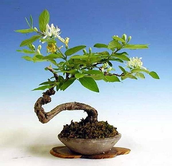 大小盆栽-8-.jpg