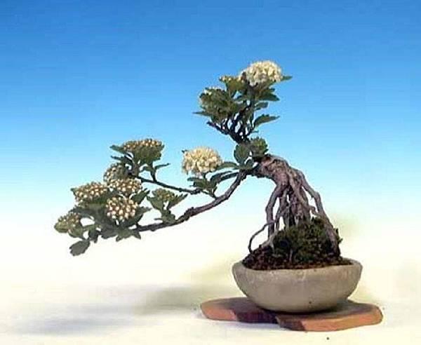 大小盆栽-12-.jpg