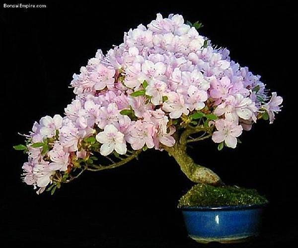 大小盆栽-18-.jpg
