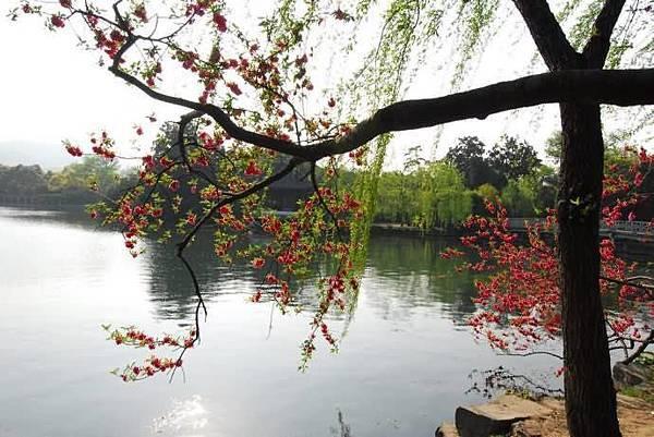 春意西湖-1-.jpg