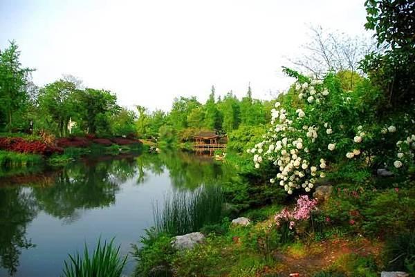 春意西湖-4-.jpg
