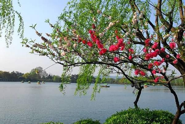 春意西湖-5-.jpg