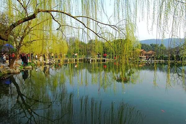 春意西湖-8-.jpg
