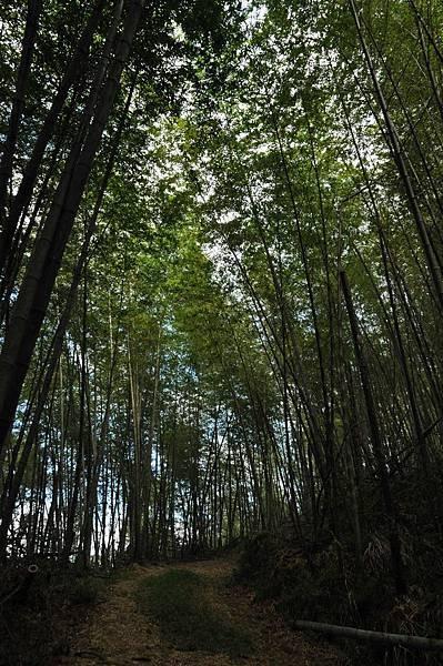 竹林挺美的