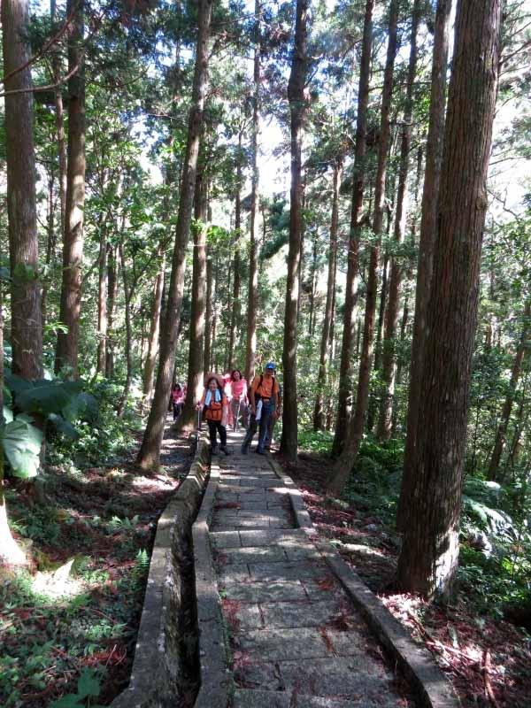 20140920_滿月圓自導式步道+杉木林+滿月圓瀑布群_自導式步道