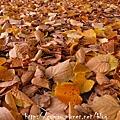 柏林的秋天02