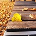 柏林的秋天03