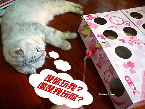 貓玩具 打地鼠 08.1.JPG