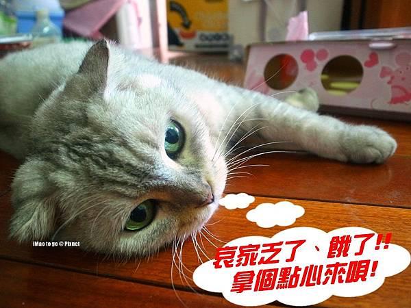 貓玩具 打地鼠 11.1.JPG
