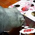 貓玩具 打地鼠 10.1.JPG