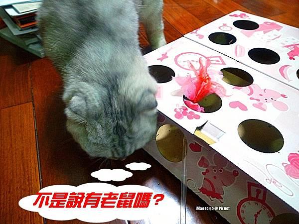 貓玩具 打地鼠 09.1.JPG
