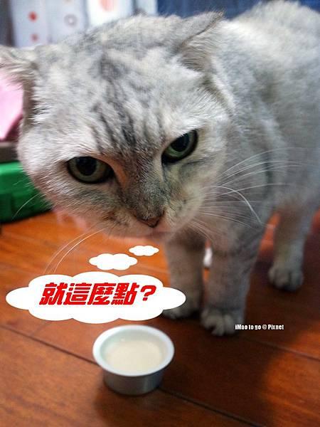 貓玩具 打地鼠 12.1.JPG