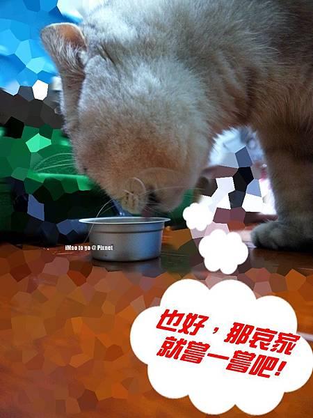 貓玩具 打地鼠 13.1.JPG