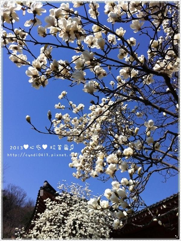 2013年韓國旅遊修圖版手機(小)116.JPG