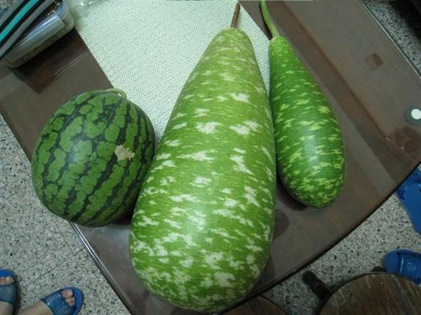 比西瓜還要大~