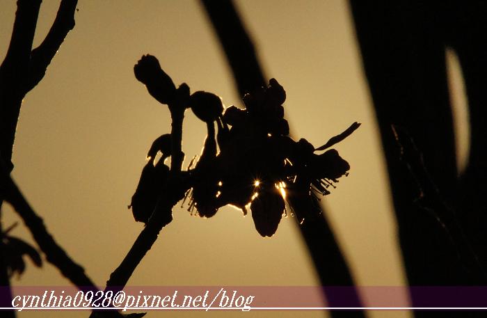 照片 171.1.jpg