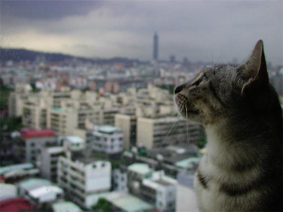 台北的天空16樓