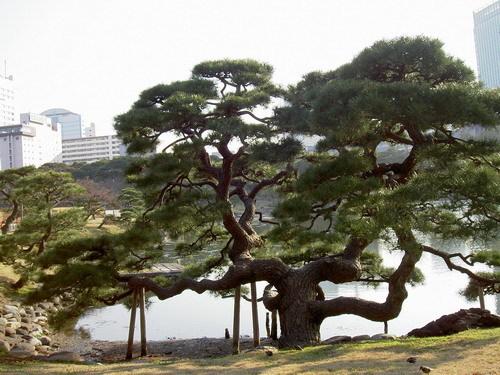 這棵樹長得很特別..