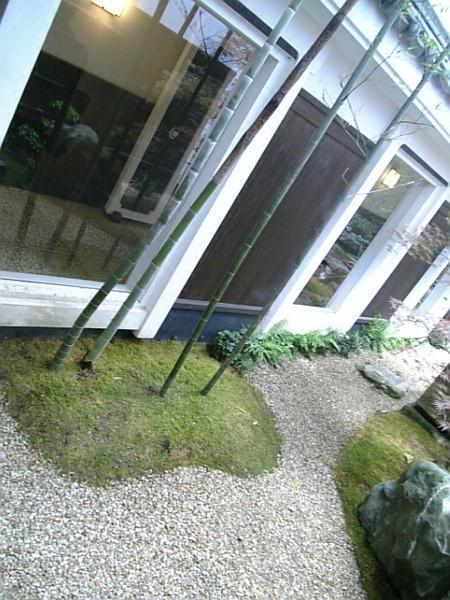 春天新萌芽的竹子