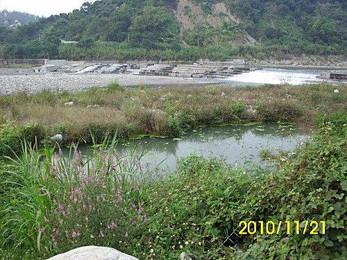 中部野塘No.9 - 烏溪畔的小野塘探勘