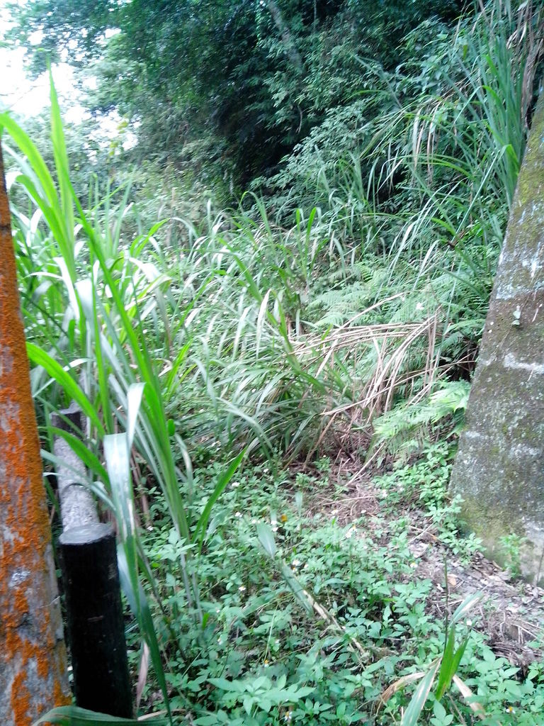 石壁吊橋 雜草叢生無法通行的另一端