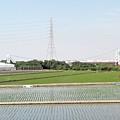 萬新吊橋遠景(萬丹、新園)