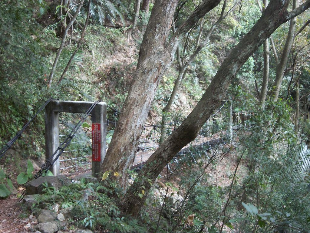 德芙蘭步道吊橋之1