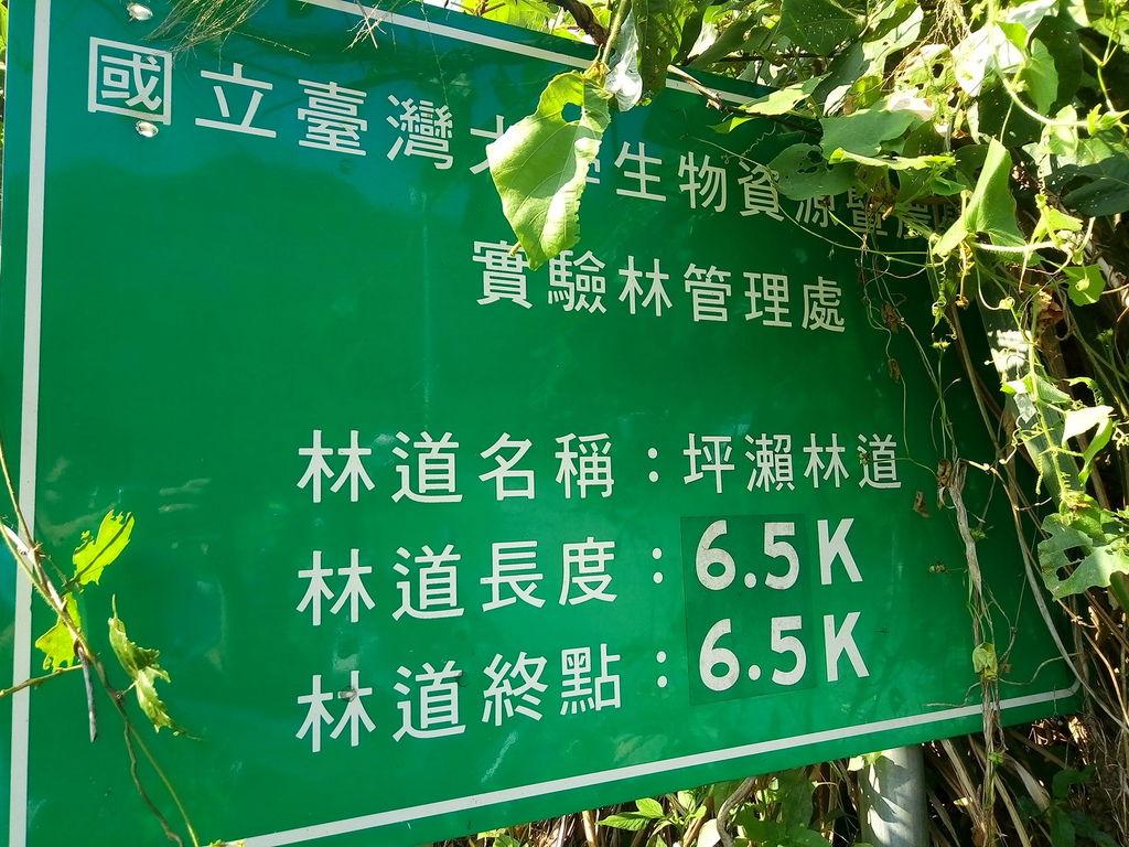 坪瀨林道6.5K