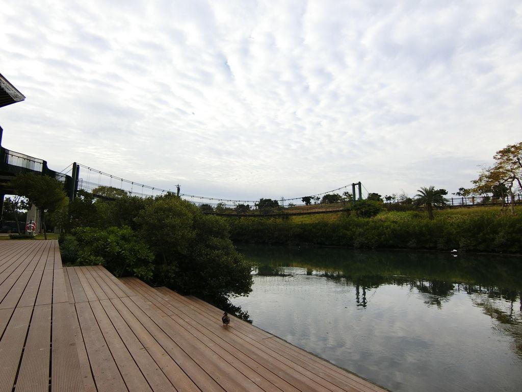 紅樹林生態復育區