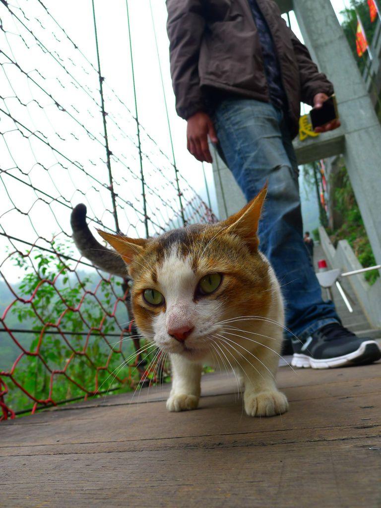 天長吊橋上的貓~