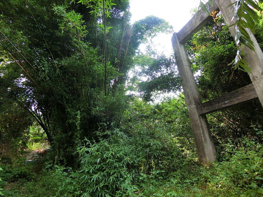 大坪林吊橋遺跡(三灣)
