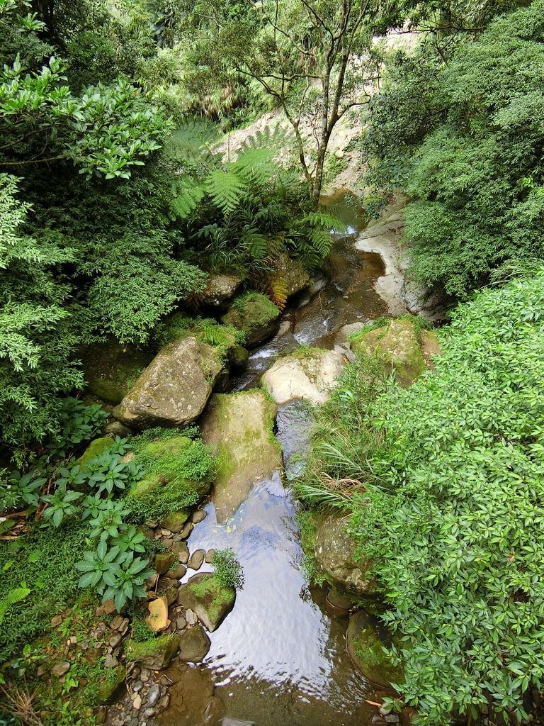 竹坑溪步道7號橋下方溪谷